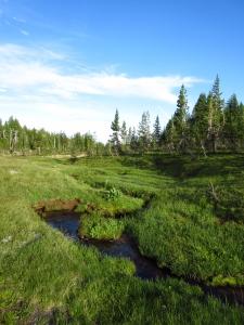 Serpentine creek just below tree-line.